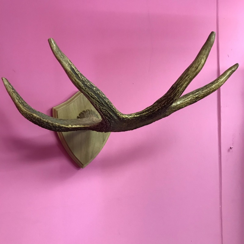 Рог Лосиный