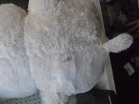 Медведь большой белый