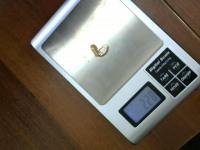 Серьги без синт.вставок Золото 585 (14K) вес 2.28 г
